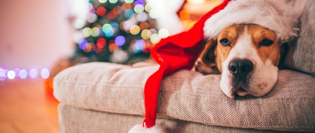 Fotoshooting-Gutscheine als Weihnachtsgeschenk in Hannover. Fotoshooting in Hannover als Geschenk für Weihnachten: Gutscheine für Partner und Freunde. Portraits, Outdoor-Fotoshooting oder coole Bilder mit unseren Fotografen an den schönsten Locations.