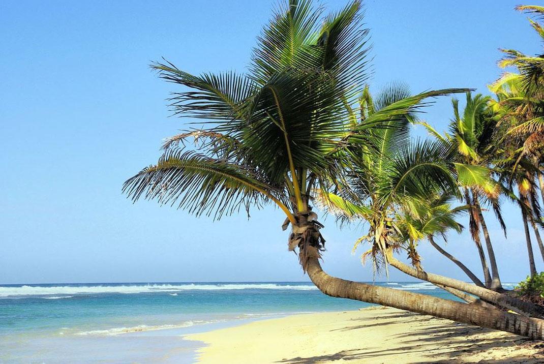 Une magnifique plage de sables fins pour se prélasser !!