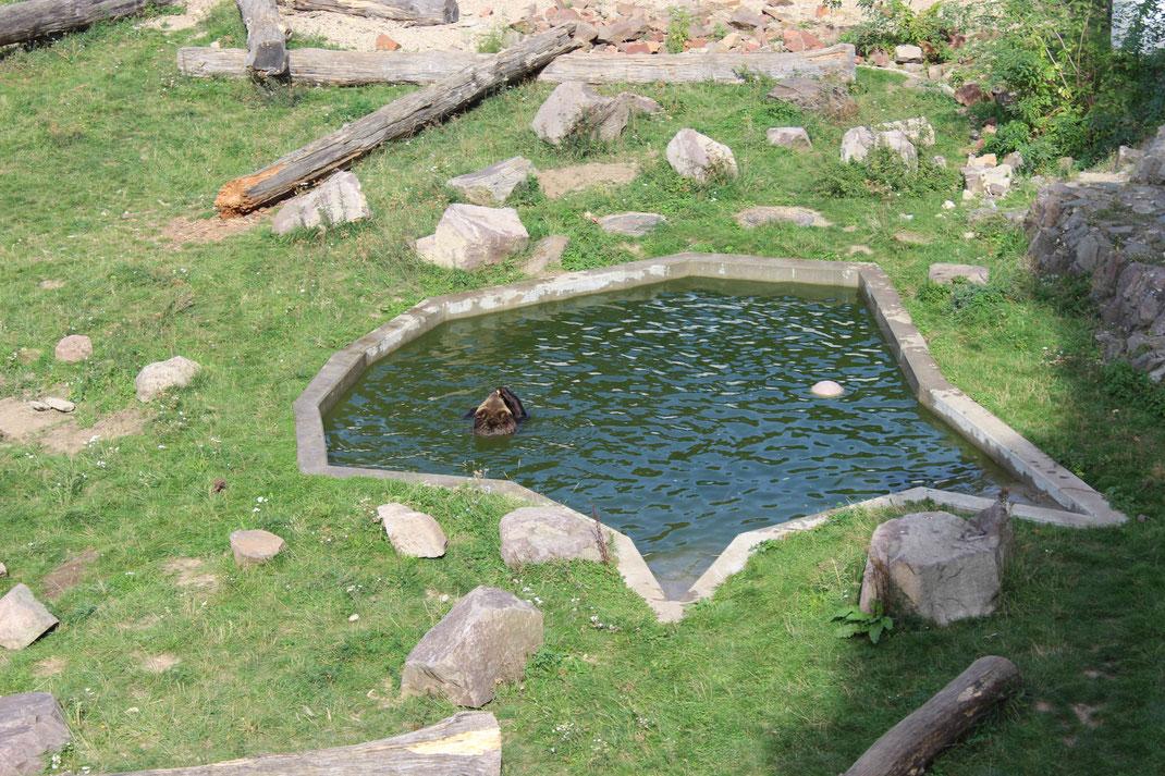 Bärengehege, sogenannter Bärengraben im Schloss Hartenfels.