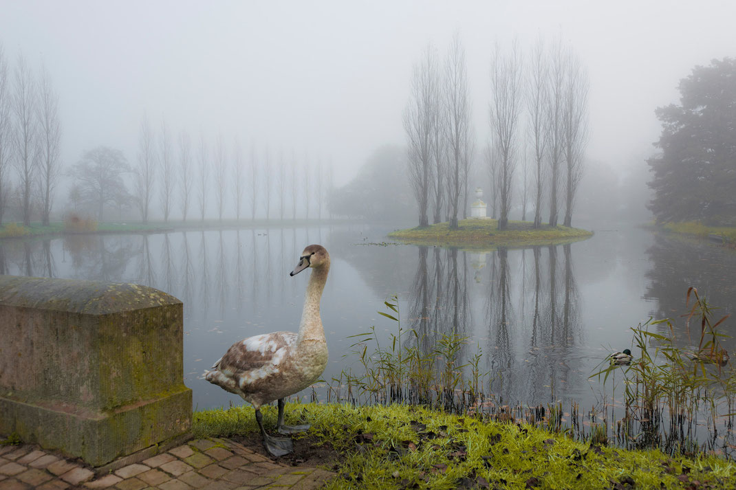 Wörlitzer Park, Sebastian Kaps