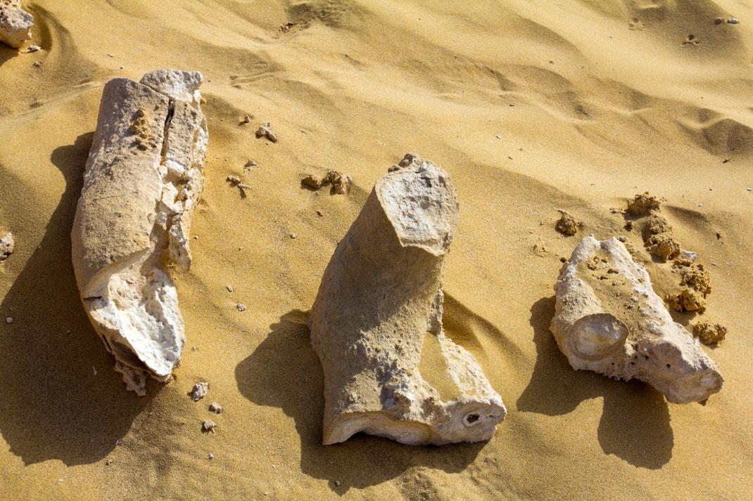 Smėlis čia ne bet koks – jį sudaro sutrintos fosilijų liekanos / Foto: Kristina Stalnionytė