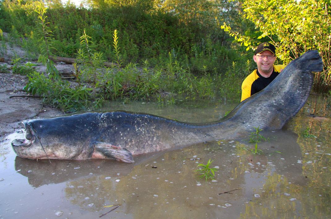 Peter Merkel, Black-Cat-Teamangler der ersten Stunde, hat einen riesigen Wels am Niederrhein gefangen. Der gigantische Fisch von über 2,53 m Länge wog 103 kg,
