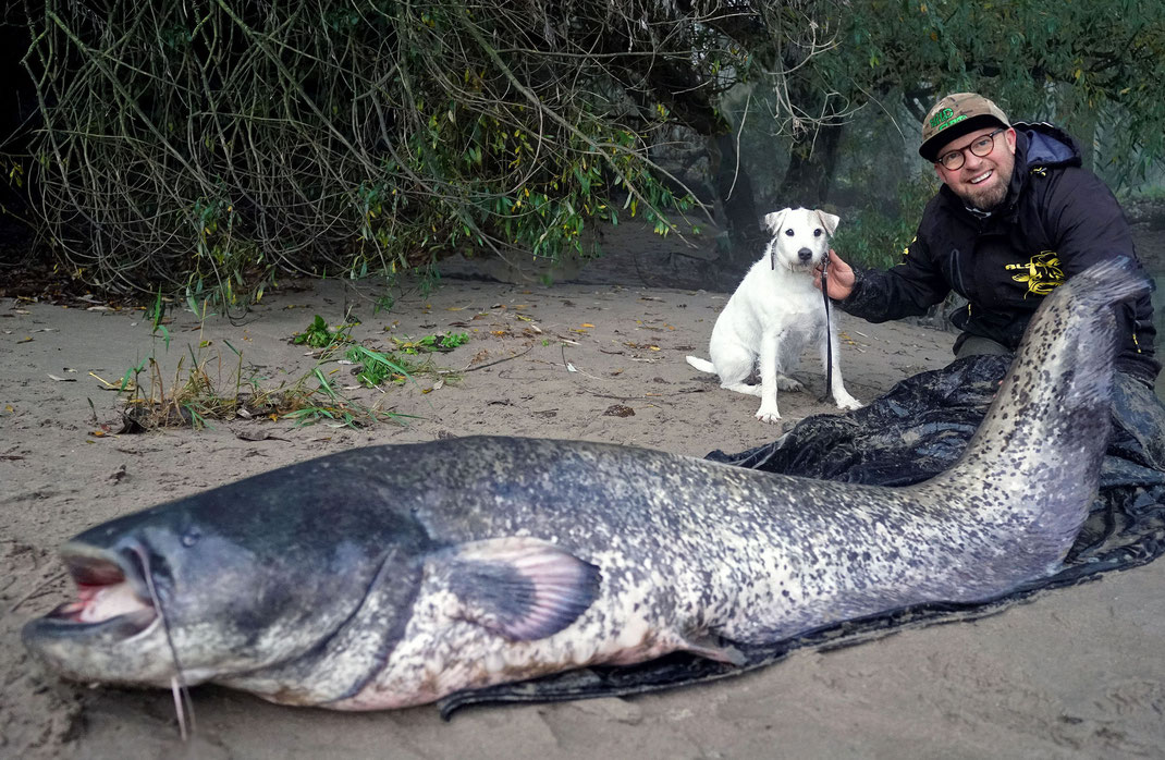 Welsangeln in Deutschalnd - Auch dieser Gewaltiger Fisch aus Deutschland konnte Peter Merkel mit der neuen Wild Cat`z Beast Rute fangen.