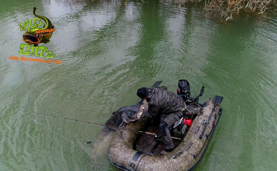 Welsangeln am Ebro-Ein für Spanien außergewöhnliches Hochwasser und ein komplett neues Angelrevier erwartete uns bei der diesjährigen WILD CAT´z Jahreswechsel Tour. Tight lines Peter Merkel