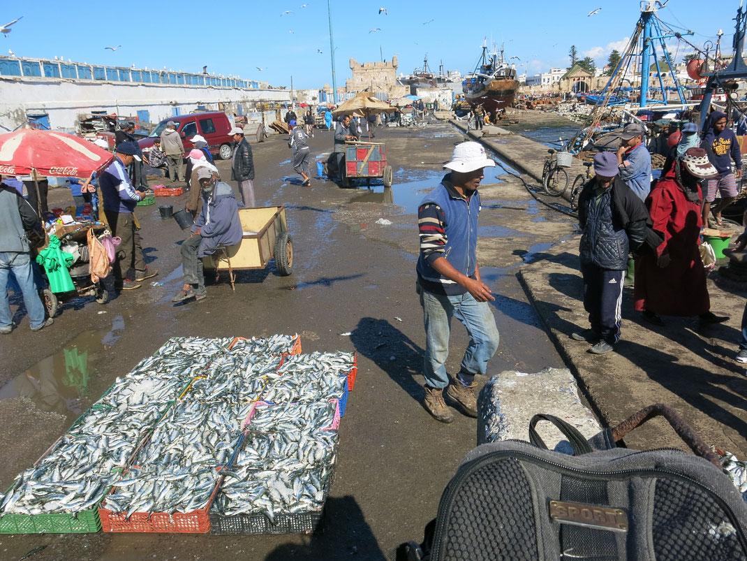 Bei den Fischern im Hafen von Essaouira frischen Fisch kaufen und für 10 Dirham im Restaurant Marssa grillade grillen lassen. Kenne ich so nur aus Marokko.