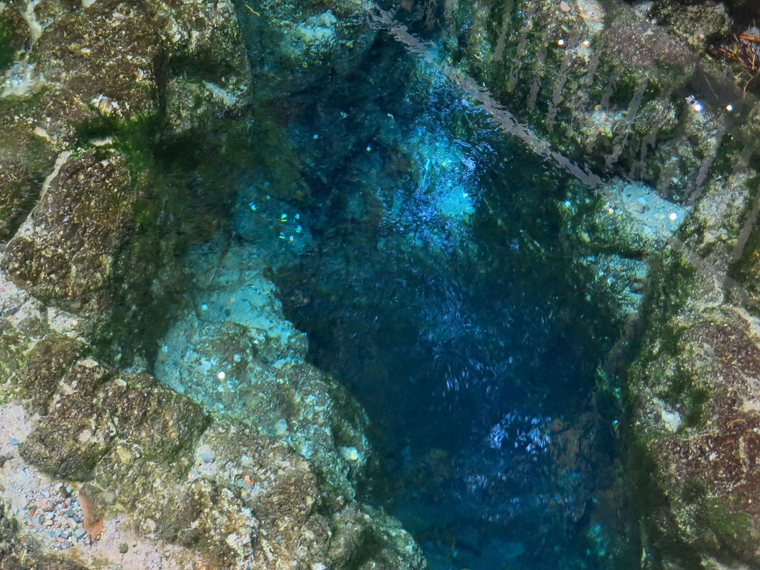 Die Hamurana Quelle, tiefste natürliche Quelle der Nordinsel von Neuseeland
