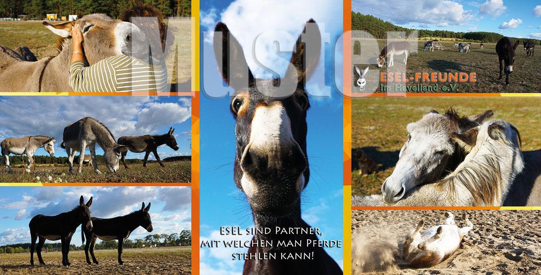 Wir unterstützen den Verein Esel-Freunde im Havelland e.V.