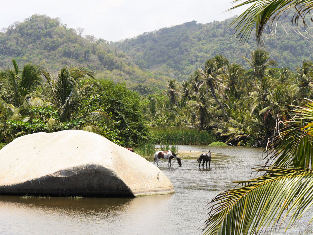 Idyllische Szenerie am Fluss... Tayrona Nationalpark, Kolumbien (Foto Jörg Schwarz)