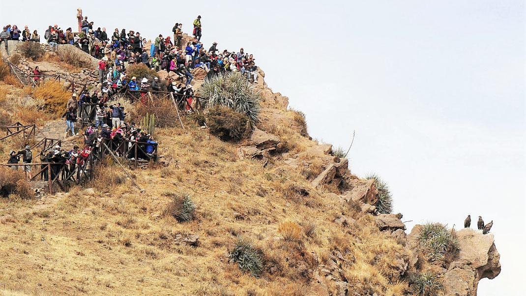 Der ganz normale Touristen-Wahnsinn am Cruz del Condor, Peru (Foto Jörg Schwarz)