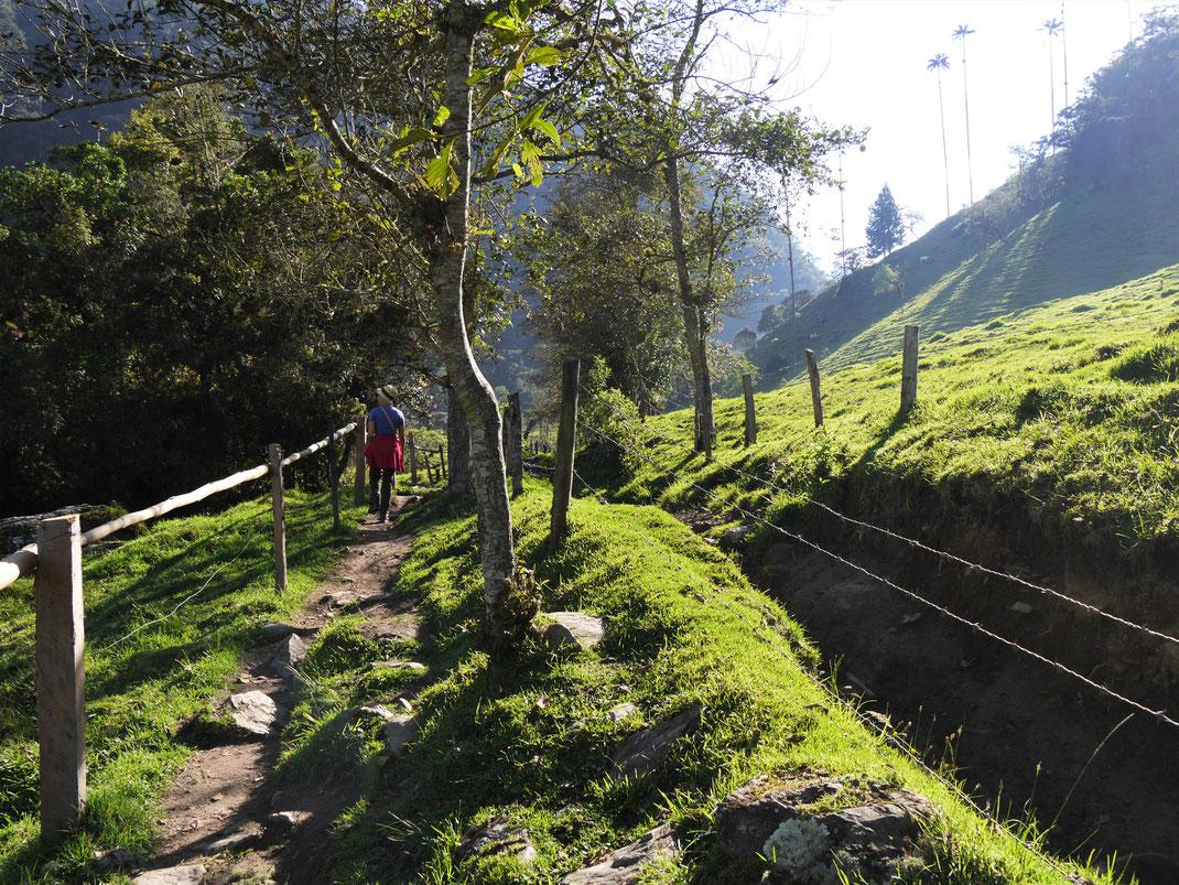 Valle de Cocora, Kolumbien (Foto Jörg Schwarz)