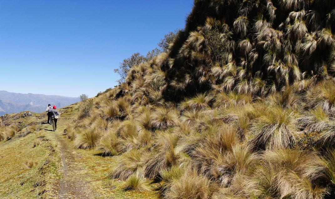 Vorbei am geliebten Pampasgras, Sorata, Bolivien (Foto Jörg Schwarz)