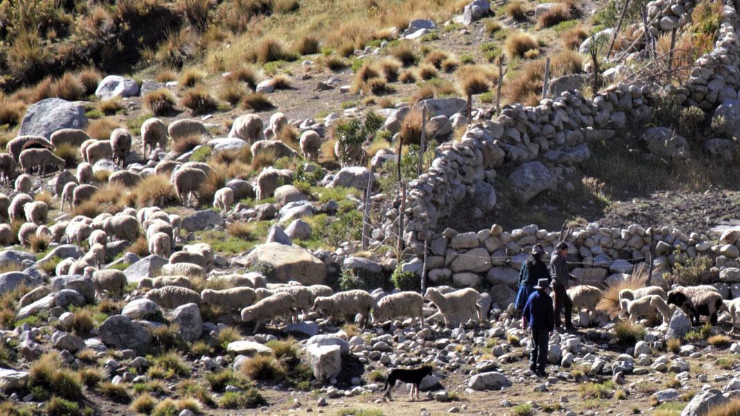 Schäfer in der Puna östlich von Huaraz, Cordillera Blanca, Peru (Foto Jörg Schwarz)
