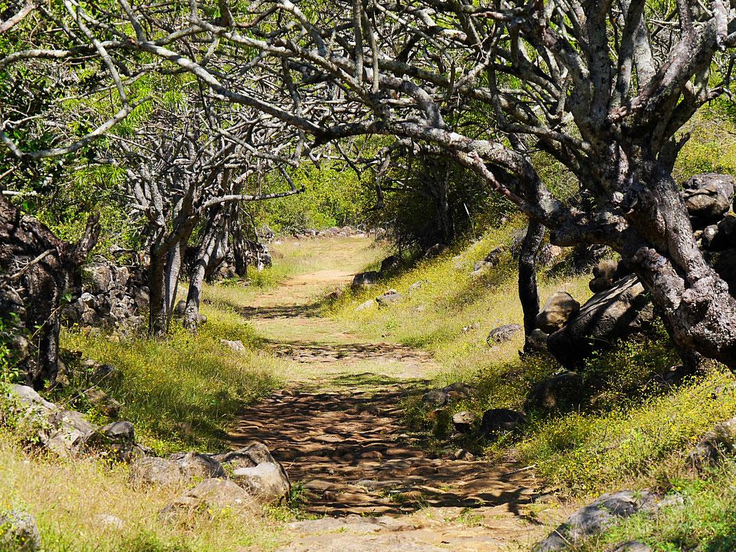 Fast wie ein verwunschener Wald aus einem Fantasy-Film, Barichara, Kolumbien (Foto Jörg Schwarz)