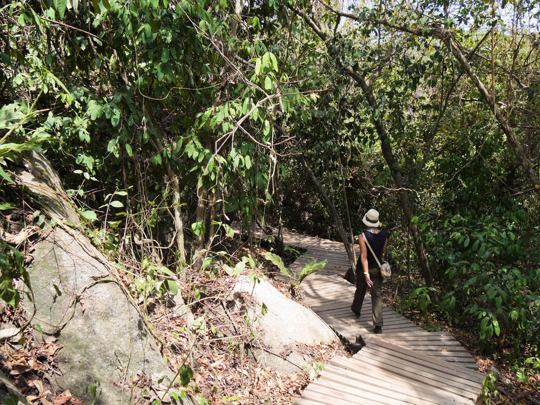 Auch an der Küste geht es immer wieder moderat auf und ab, Tayrona Park, Kolumbien (Foto Jörg Schwarz)