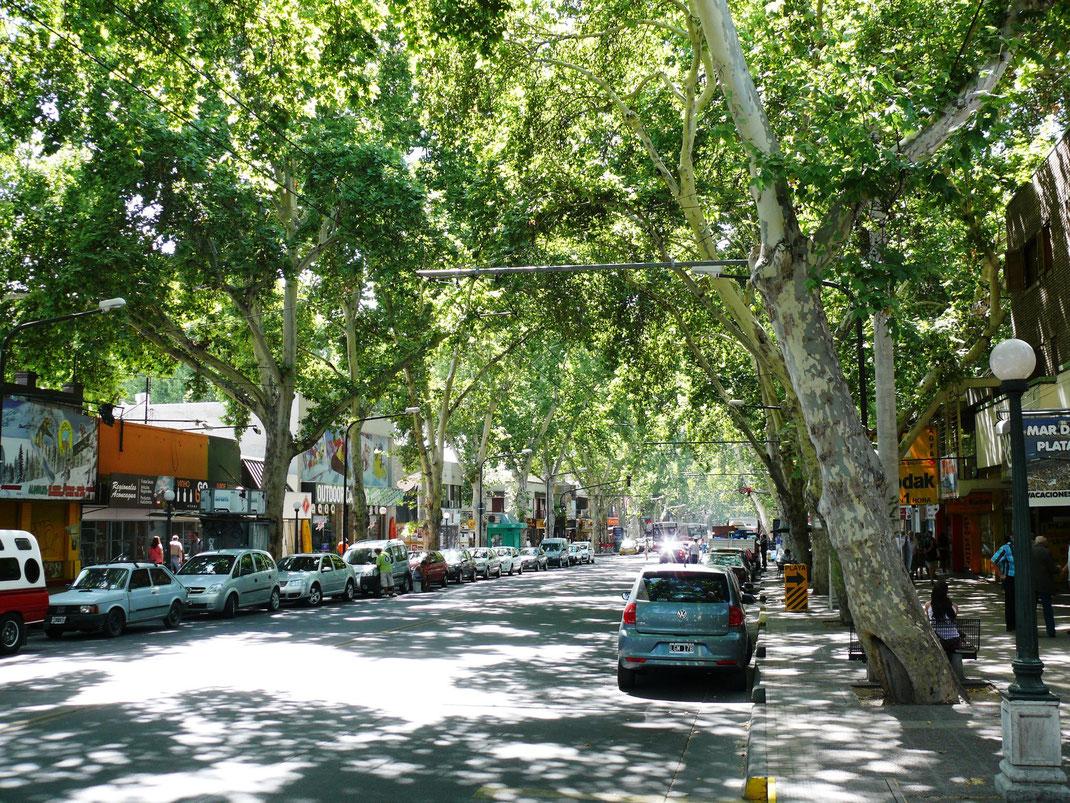 Baumbestandene Alleen prägen das Stadtbild  (Foto Jörg Schwarz)