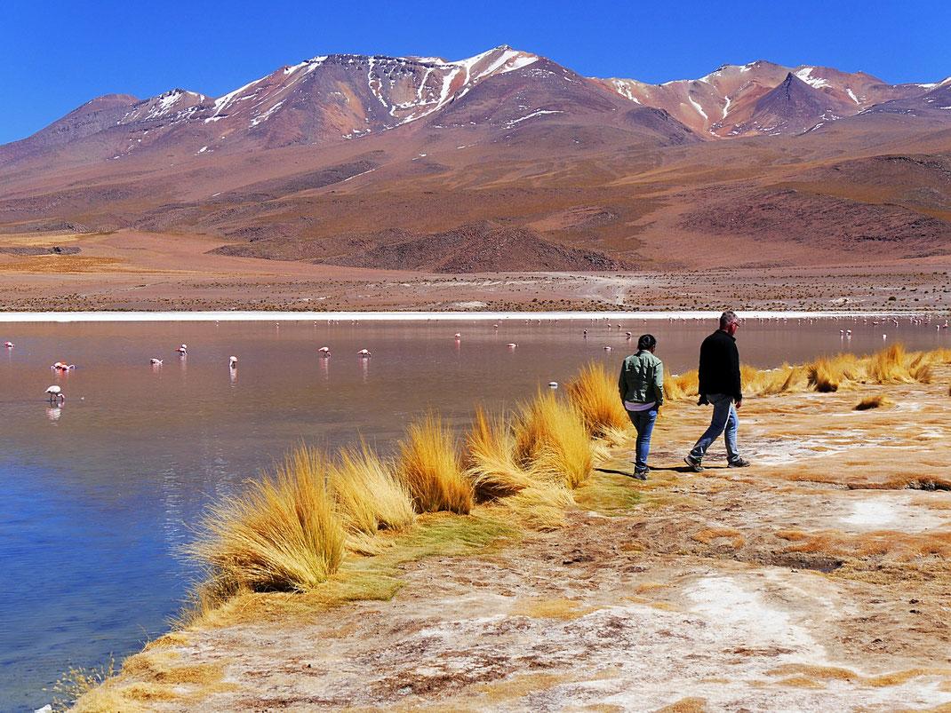 Fanstastische Landschaft und Flamingos satt an der Laguna Cañapa, Reservat de Fauna Andina, Bolivien (Foto Jörg Schwarz)