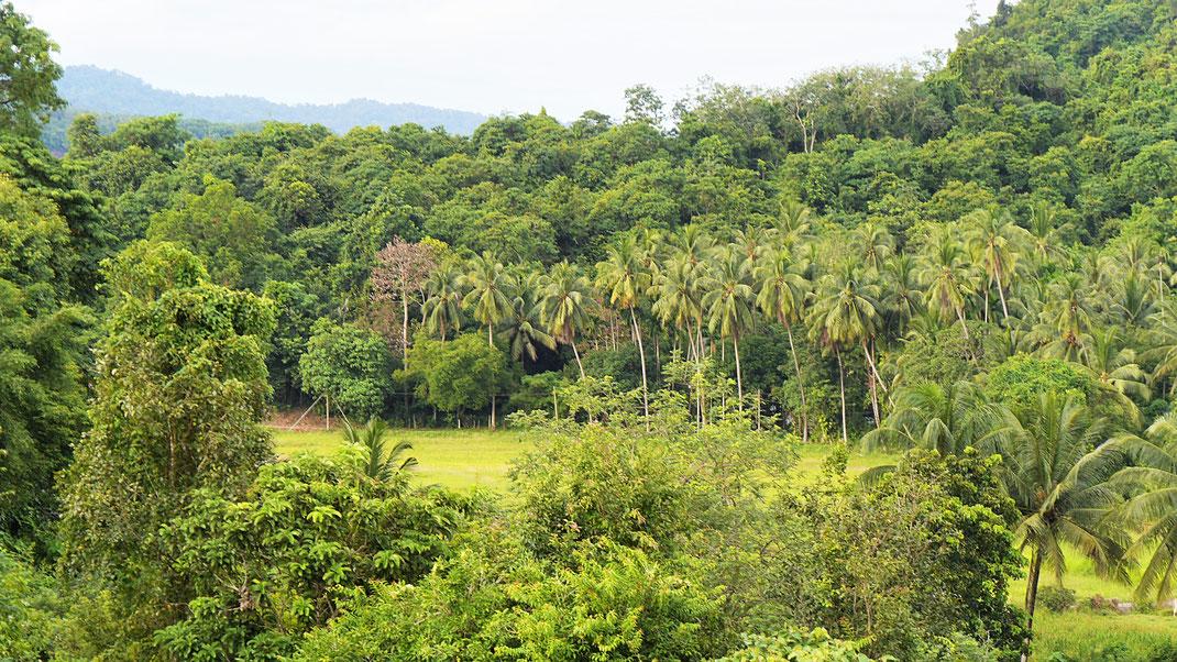 Blick in die Landschaft auf Langkawi, Malaysia (Foto Jörg Schwarz)