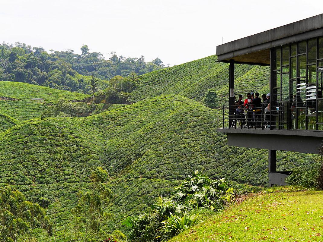 Ein wahrhaft herrlicher Ort für einen guten Tee... Cameron Highlands, Malaysia (Foto Jörg Schwarz)
