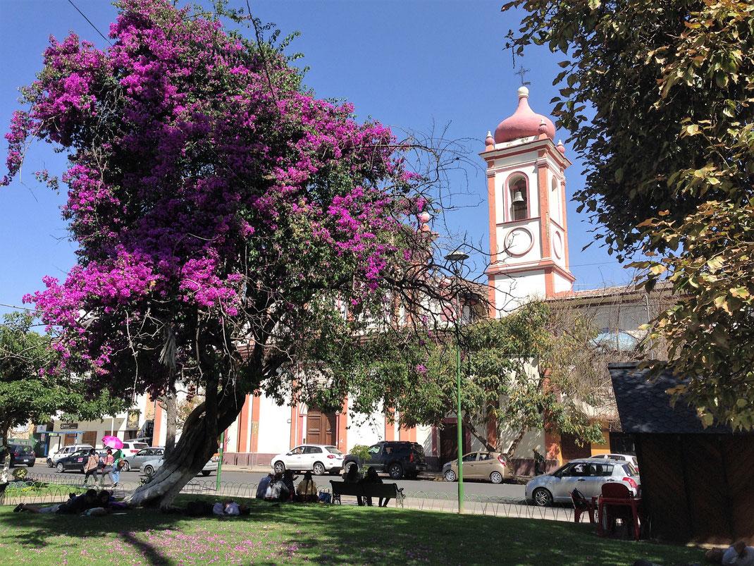 Es ist durchaus grün in der Stadt, Cochabamba, Bolivien  (Foto Jörg Schwarz)