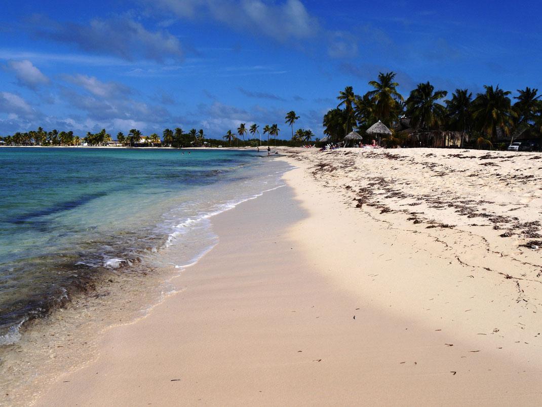 Ein wunderbarer Flecken Erde: glasklares türkiesfarbenes Wasser trifft auf schneeweißen Sand mit Palmen... (Foto Jörg Schwarz)