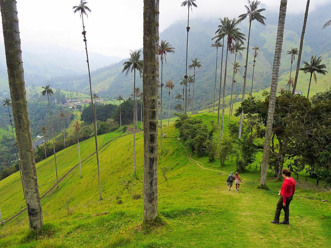 Zwischen den Giganten von Palmen fühlt man sich etwas mickrig... Valle de Cocora, Kolumbien (Foto Jörg Schwarz)