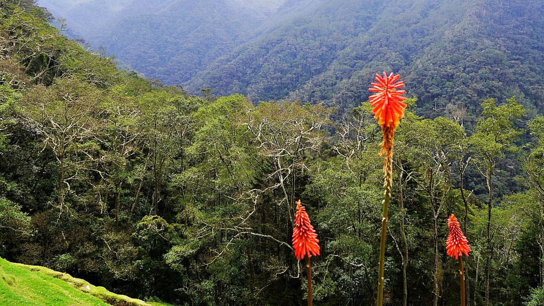 Von da hinten aus dem Flusstal sind wir raufgetrekkt - Mirador La Montaña, Valle de Cocora, Kolumbien (Foto Jörg Schwarz)