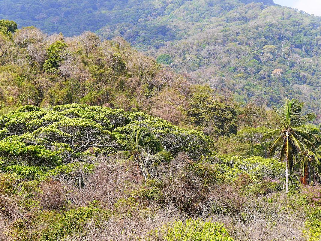 Natur pur im Tayrona Park, Kolumbien (Foto Jörg Schwarz)