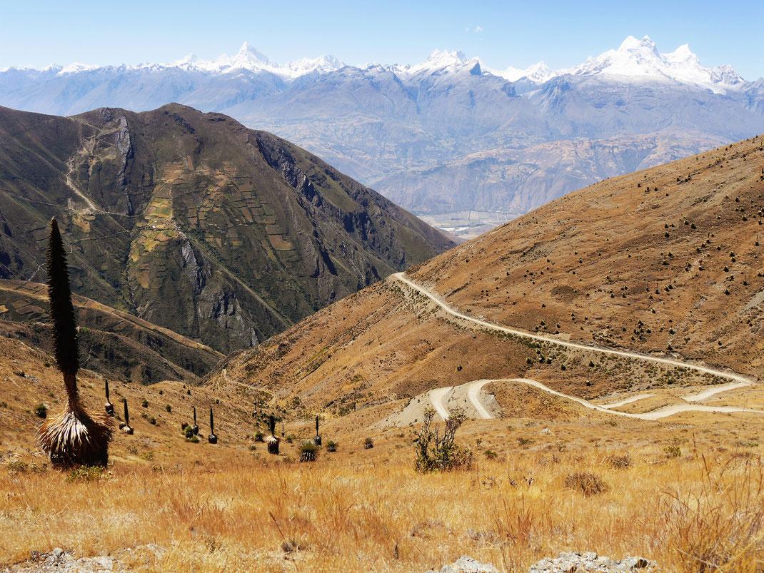 Ausblicke aus der Pampa bei Punta Winchus, vorn eineausgewachsene Puya raimondii, Punta Winchus, Peru (Foto Jörg Schwarz)