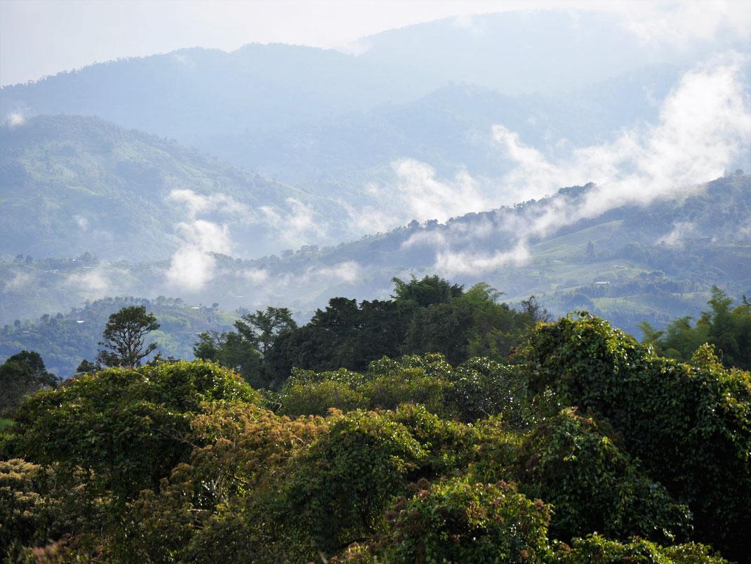 Schon ein Blick in die umliegende Natur infiziert... San Augustín, Kolumbien (Foto Jörg Schwarz)