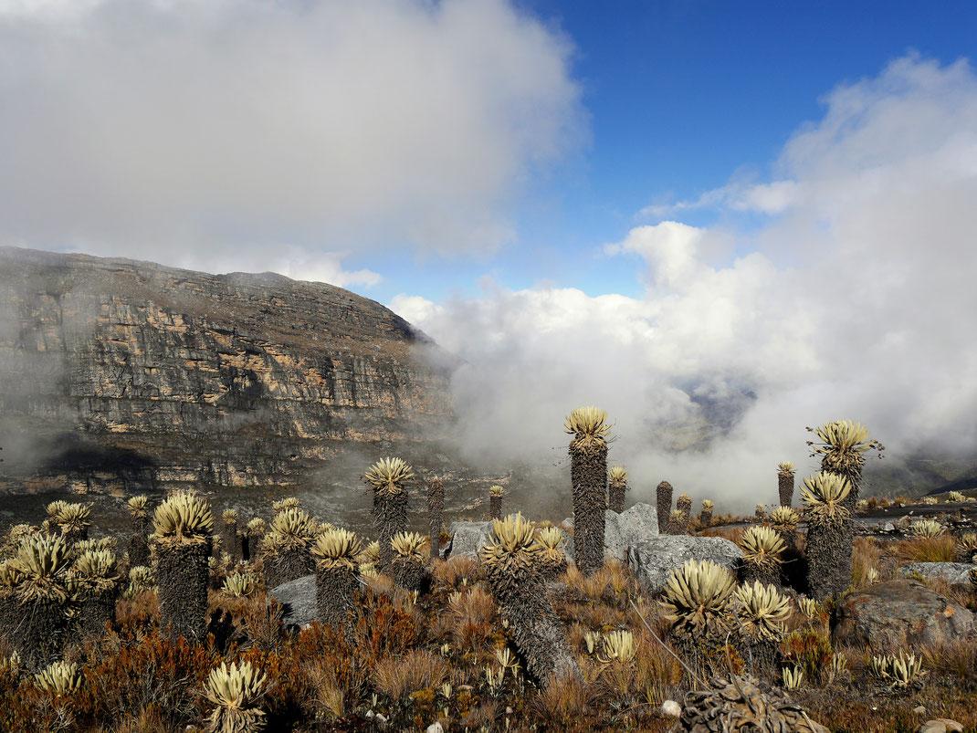 Der Blick in den unbeschreiblich schönen El Cocuy-Nationalpark, Kolumbien (Foto Jörg Schwarz)