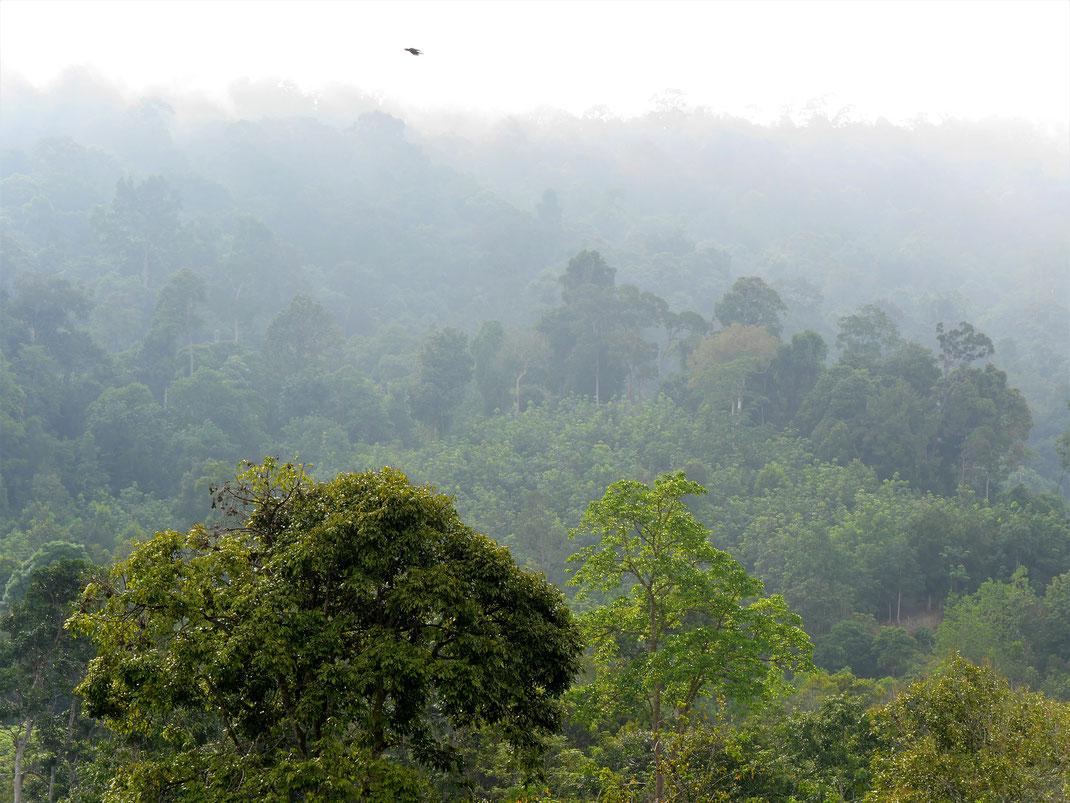 Ein Blick von Kuala Tahan auf die andere Flußseite: Der Taman Negara Nationalpark, Malaysia (Foto Jörg Schwarz)