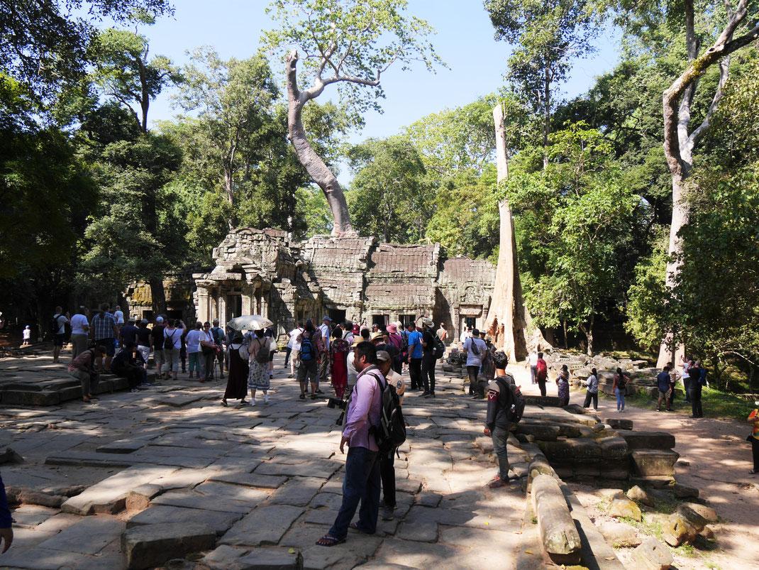 Die Popularität durch den Lara Croft-Film hat dem Ta Prohm-Tempelkomplex nicht gut getan - es ist leider extrem voll hier! Ta Prohm, Kambodscha (Foto Jörg Schwarz)