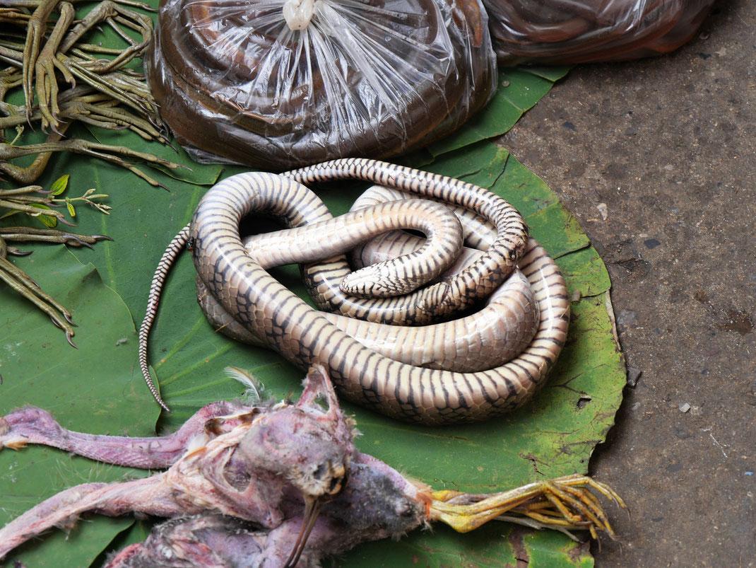 Aale, Schlangen und eine Menge Vögel sind zu finden... Battambang, Kambodscha (Foto Jörg Schwarz)