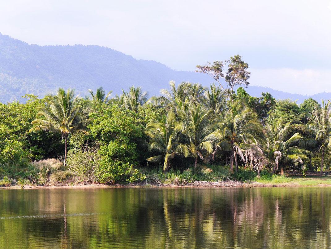 Die Idylle am Fluss ist fantastisch! Bei Kampot, Kambodscha (Foto Jörg Schwarz)