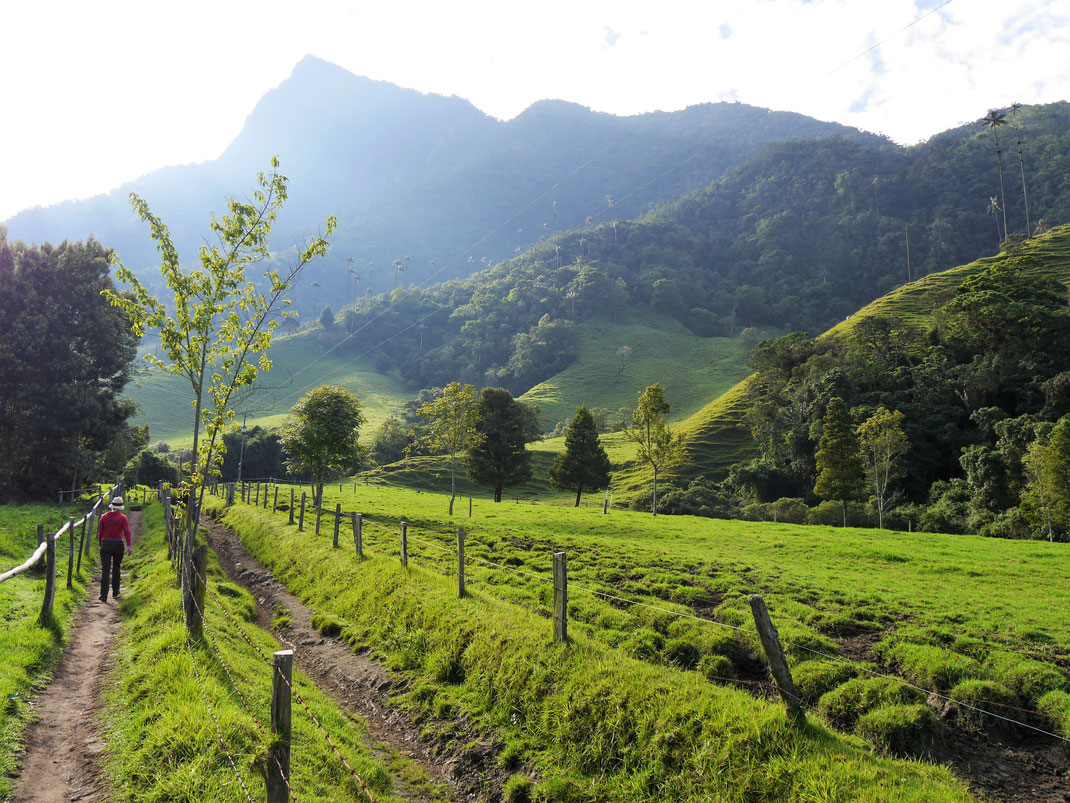 Früh am Morgen beeindruckt die Landschaft rund um das Valle de Cocora am meisten, Valle de Cocora, Kolumbien (Foto Jörg Schwarz)