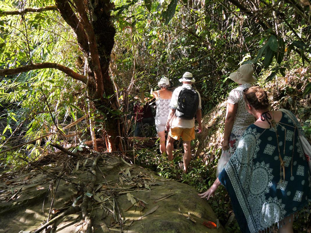 Doch vorab steht erstmal eine nicht ganz ungefährliche Trekkingtour an: Dornen, rutschig-glitschige Felsen und undurchdringliches Pflanzenwachstum... Preat-Fluss, Kambodscha (Foto Jörg Schwarz)