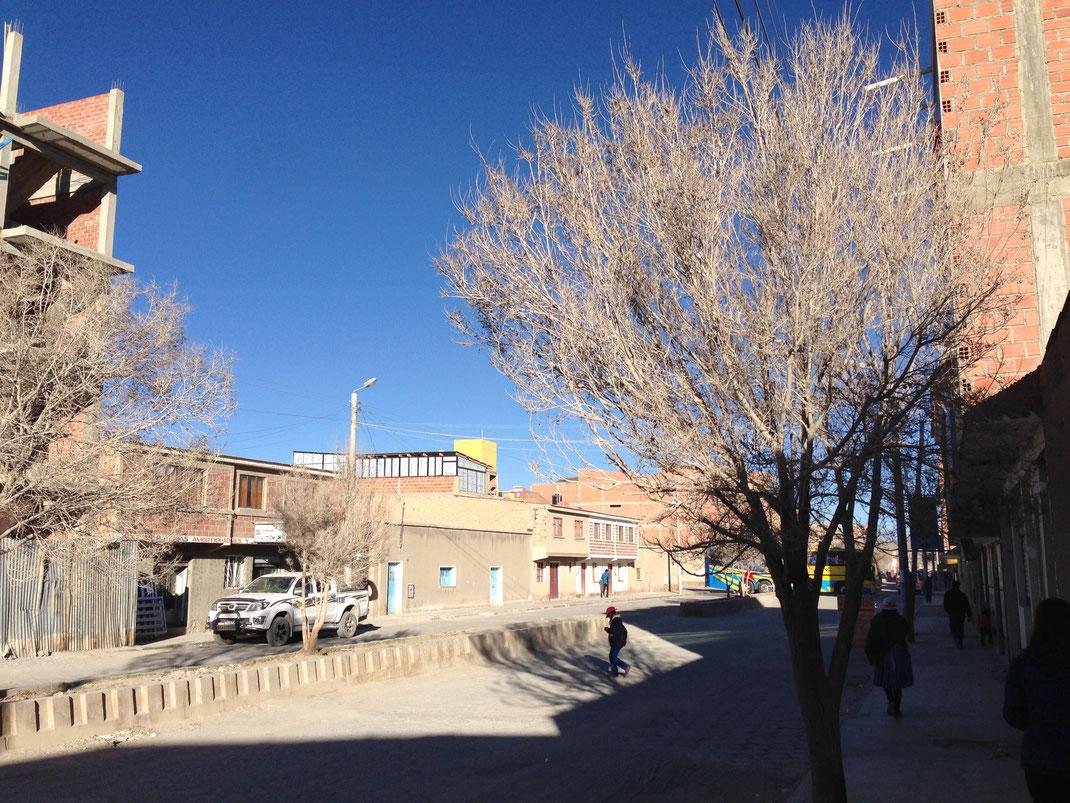 Man muss sich an die staubigen oder toten (?) Bäume Uyunis erst gewöhnen... Uyuni, Bolivien (Foto Jörg Schwarz)