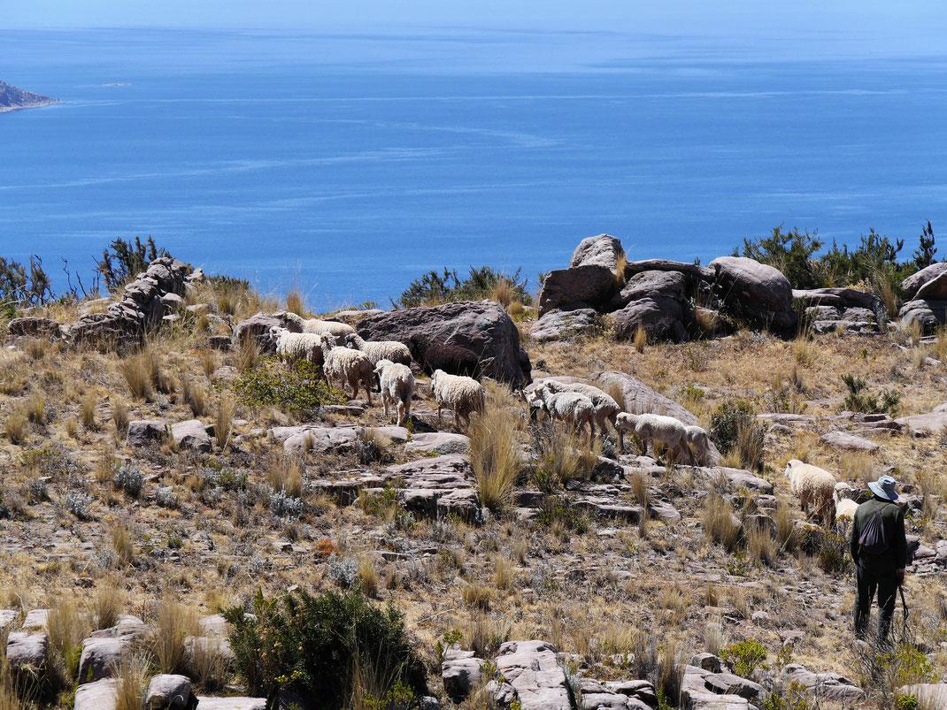 Auf dem Gipfel trifft man freundliche Schäfer mit ihren Herden, Capachica, Santa Maria, Peru (Foto Jörg Schwarz)