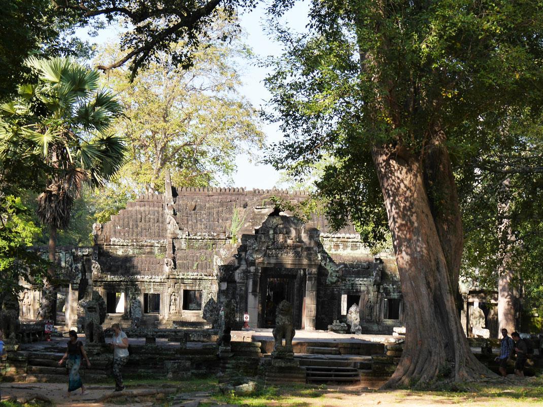 Umrahmt von wunderbarem Wald ist Banteay Kdei eine stimmungsvolle Angelegenheit... Banteay Kdei, Kambodscha (Foto Jörg Schwarz)