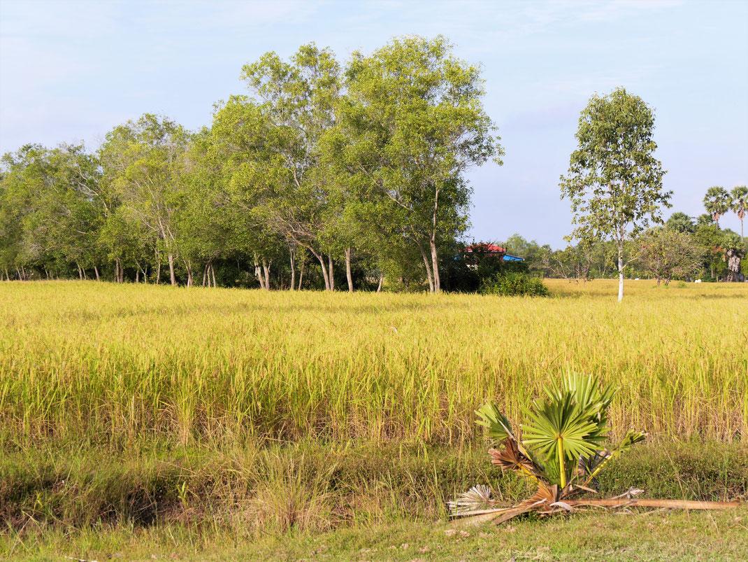 Auf dem Weg zur Grenze: Weiterhin schönste Landschaft... Takeo, Kambodscha (Foto Jörg Schwarz)