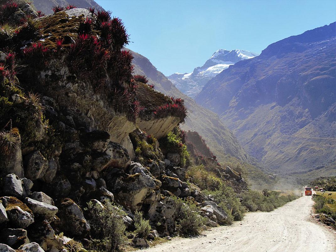 Flora und Landschaft an den Lagunas Llanganucos, bei Yungay, Peru (Foto Jörg Schwarz)