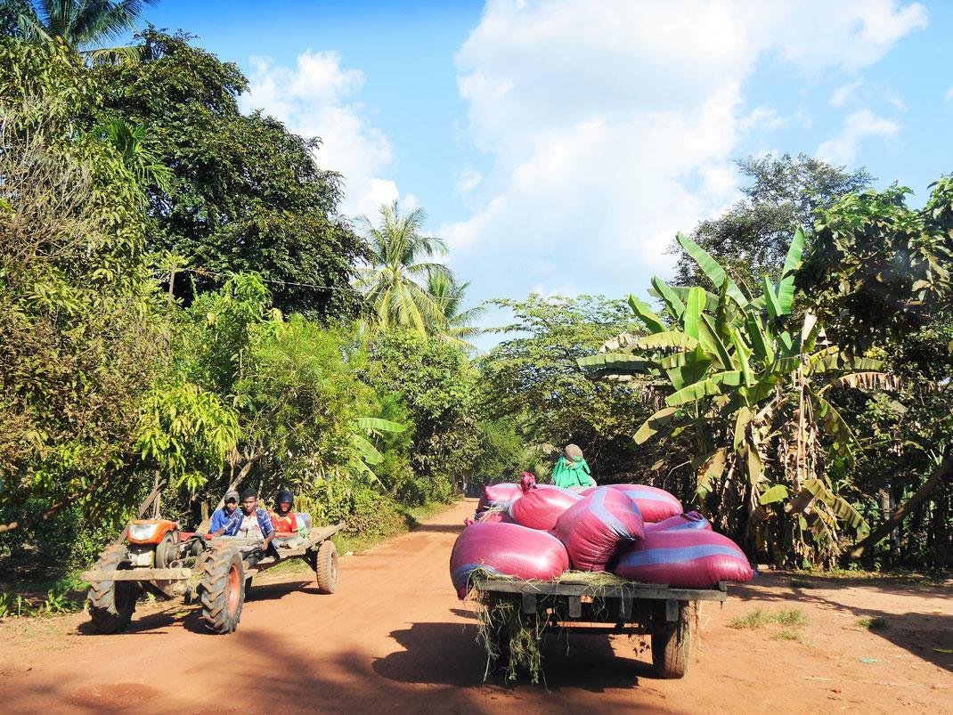 Wer das echte Kambodscha abseits der Sehenswürdigkeiten sehen aber auf letztere gleichwohl nicht verzichten möchte, der sollte sich in der Region Preah Vihear umsehen... Kambodscha (Foto Jörg Schwarz)
