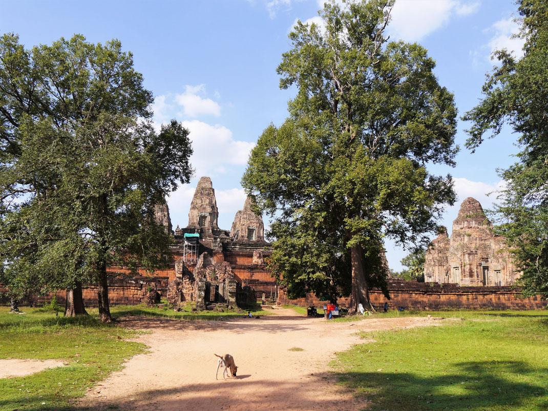 Die von Bäumen gesäumte Anlage ist einen Besuch wert, Pre Rup, Kambodscha (Foto Jörg Schwarz)