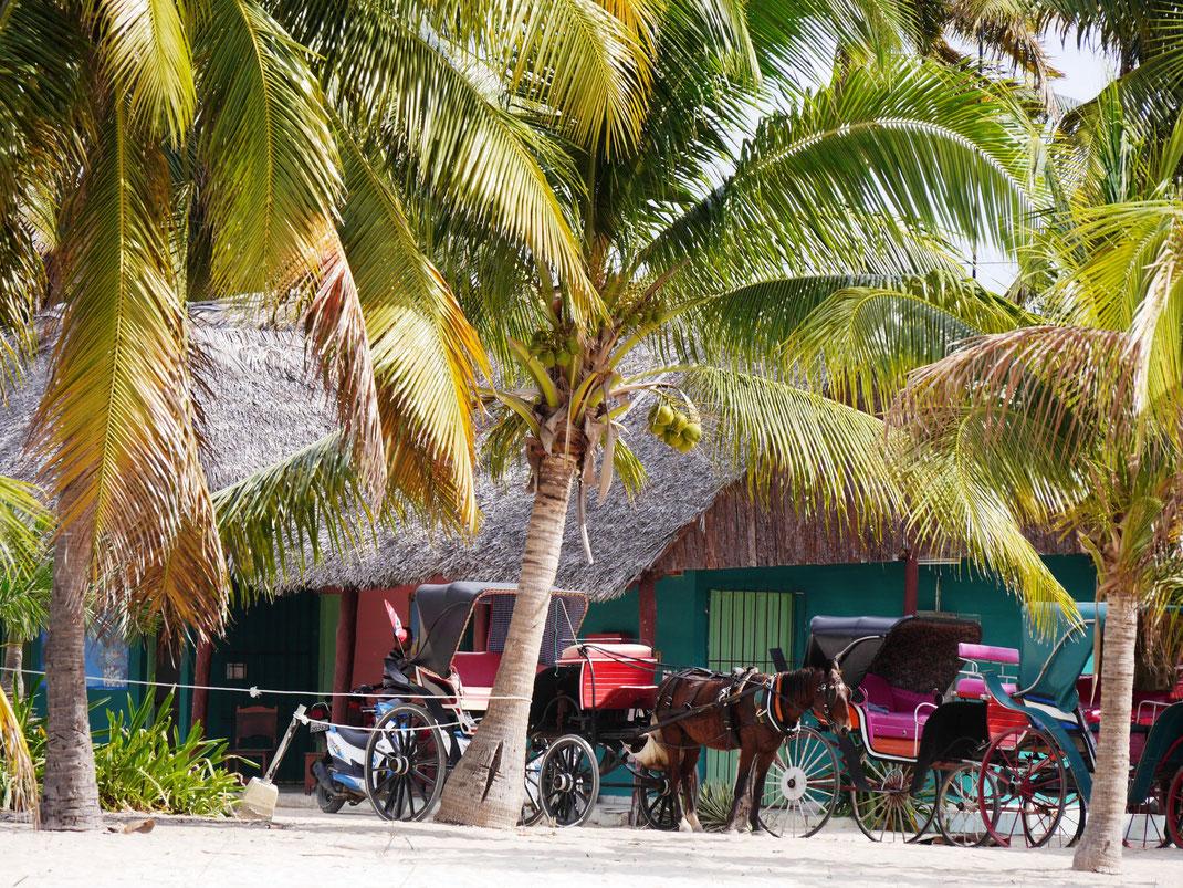Die lange Zufahrt besser mit der Kutsche machen: Die weichen Sandwege machen es Fahrradfahrern schwer... (Foto Jörg Schwarz)
