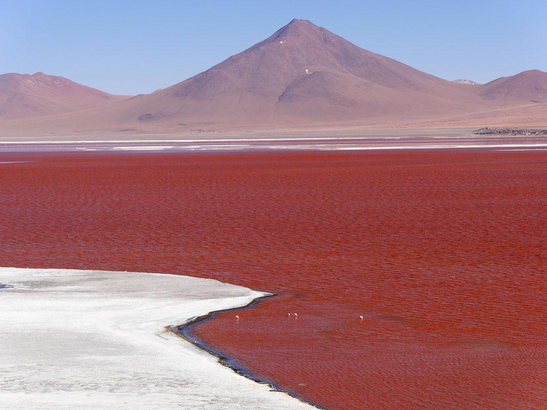Laguna Colorada - Algen und ein hoher Mineralstoffgehalt im Wasser, dazu ein bestimmter Einfall von Licht lassen den See rot erscheinen, Reserva de Fauna Andina, Bolivien (Foto Jörg Schwarz)