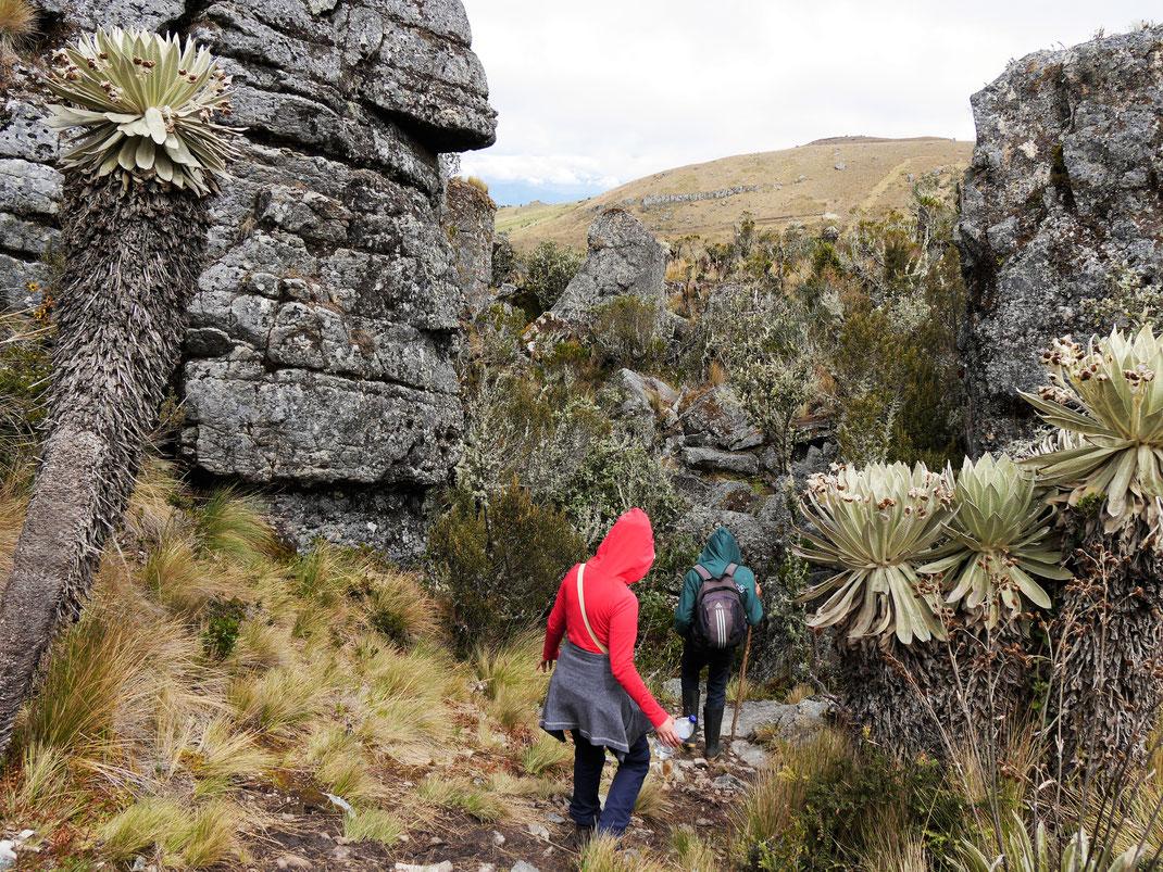 Fantastische zerklüftete Landschaft, die das Wandern hier zur wahren Freude macht... Páramo de Ocetá, bei Monguí, Kolumbien (Foto Jörg Schwarz)