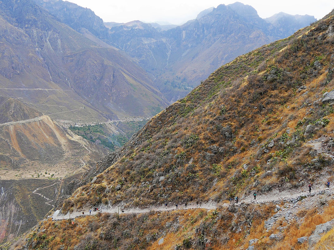 Die Schlange der aufsteigenden Trekker ist heute lang... Colca-Canon, Peru (Foto Jörg Schwarz)