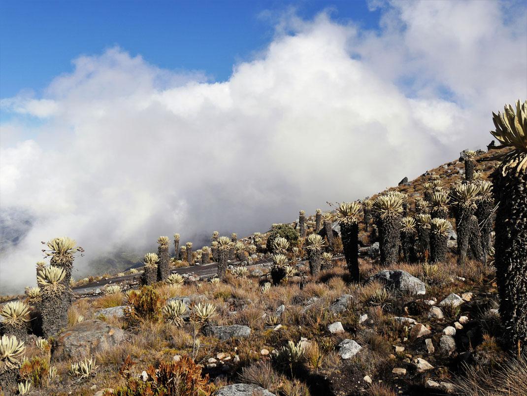 Es ist heute die Mischung aus Wolken, Sonne und páramo, die diesen Ort besonders macht, El Cocuy Nationalpark, Kolumbien (Foto Jörg Schwarz)