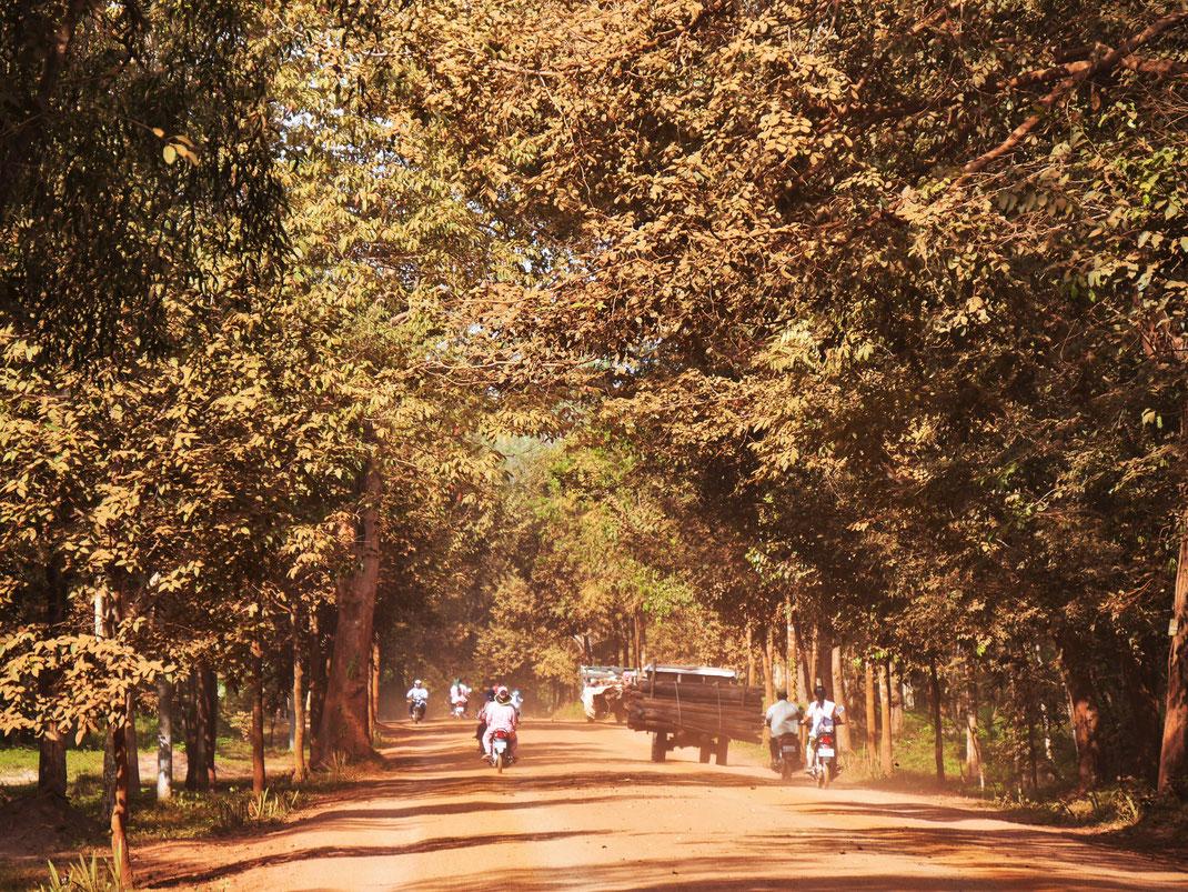 Schon unmittelbar außerhalb der Stadt begeistert die Natur, Bei Kompong Thom, Kambodscha (Foto Jörg Schwarz)