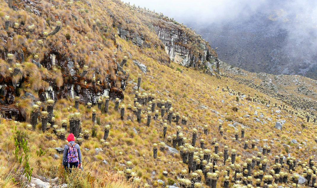 Auf dem Weg zurück ist es diesig und kalt... Parque Nacional del Cocuy, Kolumbien (Foto Jörg Schwarz)
